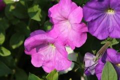 Цветки сада в лете Стоковые Изображения RF