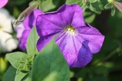 Цветки сада в лете Стоковое фото RF