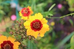 Цветки сада в лете Стоковое Изображение RF