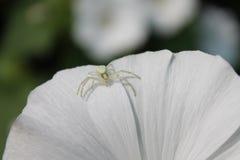 Цветки сада в лете Стоковая Фотография RF