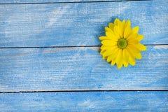 Цветки сада над покрашенной предпосылкой деревянного стола фон с космосом экземпляра Красивые цветки на деревянной предпосылке стоковые изображения rf