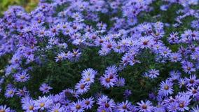 Цветки сада осени сток-видео