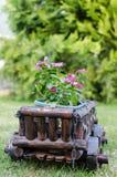 Цветки сада Стоковое Изображение