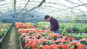 Цветки садовника распыляя в gardenhouse 4K акции видеоматериалы