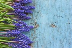 Цветки свежей весны голубые на деревянной голубой таблице Взгляд сверху с космосом экземпляра Стоковое Изображение RF