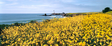 цветки светлый pacific Стоковое фото RF