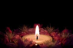 цветки свечки стоковое фото