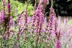 цветки сельской местности Стоковые Изображения