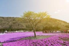 Цветки селективного фокуса красивые розовые Стоковая Фотография RF