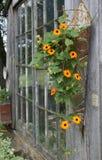 Цветки сельского дома - фото Питером j Restivo стоковое фото