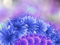 цветки Сине-бирюзы, на розовым предпосылке запачканной пурпуром Стоковые Изображения RF