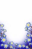 Цветки сини рамки стоковые изображения rf