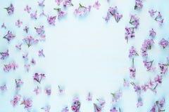 Цветки сирени на голубой предпосылке Стоковые Изображения