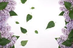 Цветки сирени с обеих сторон экрана С зелеными листьями в середине Стоковые Фотографии RF