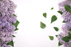 Цветки сирени с обеих сторон экрана С зелеными листьями в середине Стоковая Фотография