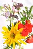 цветки смешали Стоковые Фотографии RF