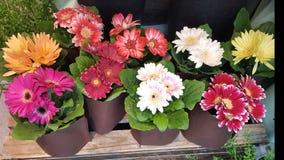 Цветки смешивания стоковое изображение rf