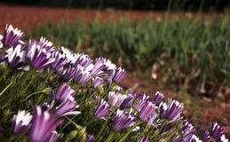 цветки смотря солнце Стоковое фото RF