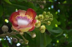 Цветки соли в саде Стоковая Фотография RF