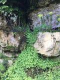 Цветки стены времени весны Стоковые Фото