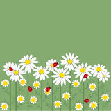 Цветки стоцвета на зеленой предпосылке иллюстрация вектора