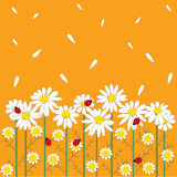 Цветки стоцвета на померанцовой предпосылке бесплатная иллюстрация