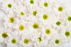 Цветки стоцвета Стоковая Фотография