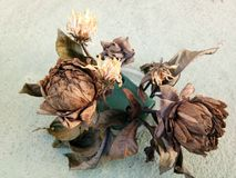 Цветки сушат стоковое фото