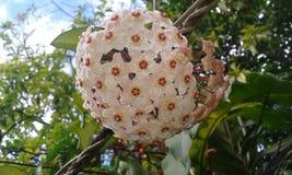 Цветки сферы Стоковое Изображение
