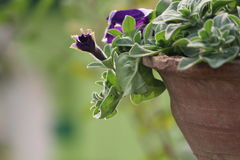 Цветки славны Стоковое фото RF