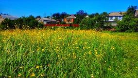 Цветки с голубым небом Стоковые Изображения RF