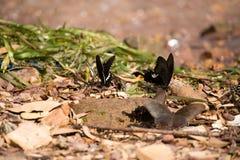 Цветки с много бабочек Стоковые Фото