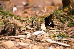 Цветки с много бабочек Стоковое фото RF