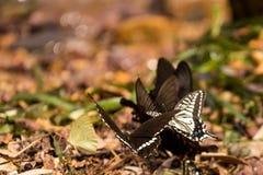 Цветки с много бабочек Стоковые Изображения RF