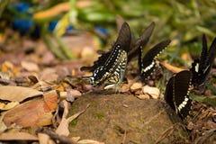 Цветки с много бабочек Стоковая Фотография RF