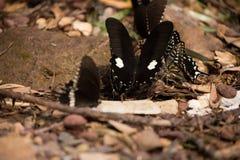 Цветки с много бабочек Стоковое Изображение