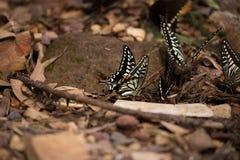 Цветки с много бабочек Стоковые Фотографии RF
