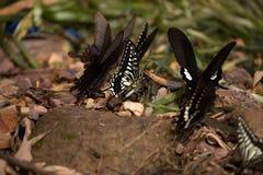 Цветки с много бабочек Стоковое Изображение RF