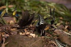 Цветки с много бабочек Стоковая Фотография
