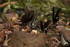 Цветки с много бабочек Стоковые Изображения