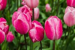 Цветки с падениями дождя воды Стоковое Изображение RF