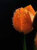 Цветки с падениями воды Стоковое Изображение RF