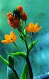 Цветки с падениями воды Стоковая Фотография RF