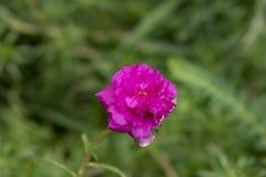 Цветки с самого начала стоковые изображения