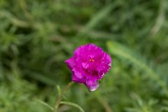 Цветки с самого начала стоковое изображение rf