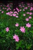 Цветки с фото фильма bokeh свирли Стоковая Фотография