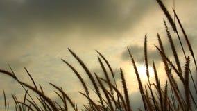 Цветки травы в ветре видеоматериал