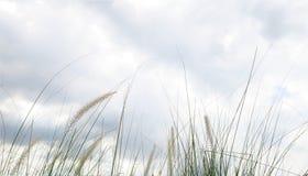 Цветки травы в пасмурном дне Стоковая Фотография