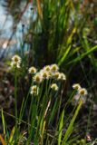 Цветки травы в природе Стоковая Фотография RF