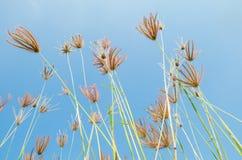 Цветки травы на поле Стоковое Изображение RF